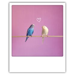 Carte pickmotion - Oiseaux coeur