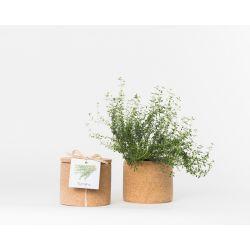 Pot en liège - Thym - Plante à faire pousser -