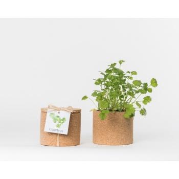 Pot en liège - Coriandre - Plante à faire pousser -
