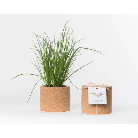 Pot en liège - Ciboulette - Plante à faire pousser -