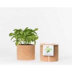 Pot en liège - Basilic - Plante à faire pousser -