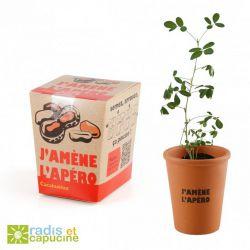 Kit avec pot, terre et graines à semer - J'amène l'apéro cacahuètes