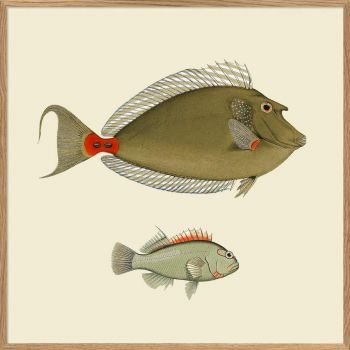Affiche 2 poissons 30*30 cm - The Dybdahl Co.