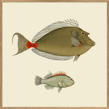 Affiche 2 poissons 30*30 cm - The Dybdahl Co.