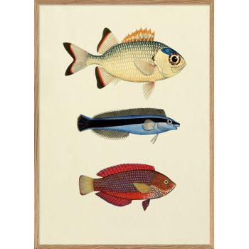 Affiche 3 poissons (1) 30*40 cm - The Dybdahl Co.