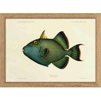 "Cadre poisson ""bleu"" 15*21 cm - The Dybdahl Co."