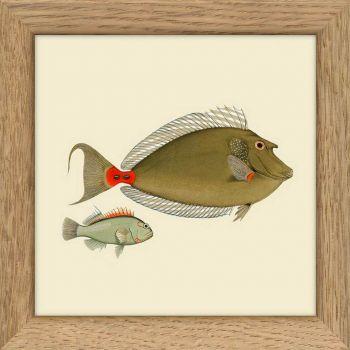 Mini cadre 2 poissons (2) 10*10 cm - The Dybdahl Co.