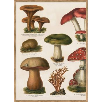 Affiche Champignons (1) 30*40 cm - The Dybdahl Co.