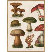 Affiche Champignons (1) 30*40 cm - The Dybdahl Co.