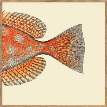 Affiche queue de poisson 30*30 cm - The Dybdahl Co.