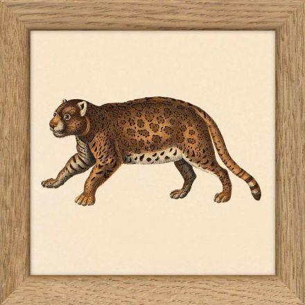 Mini cadre animal 10*10 cm - The Dybdahl Co.
