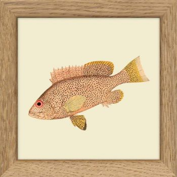 "Mini cadre poisson ""rose"" 10*10 cm - The Dybdahl Co."