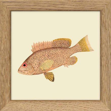 "Mini cadre poisson ""rose"" 10*10 cm - The Dybdahl Co."