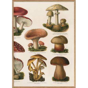 Affiche Champignons (2) 30*40 cm - The Dybdahl Co.